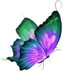 Colour Me Pretty Butterfly